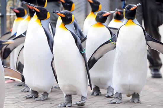 Things to do - Edinburgh Zoo
